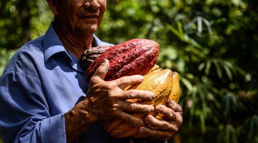 Colombia bereikt nieuw record cacaoproductie ondanks El Niño