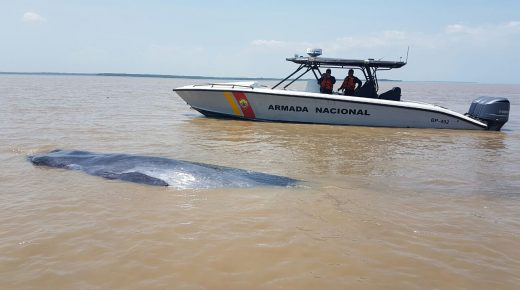 Colombiaanse marine redt walvis twee keer