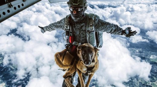Hond van Colombiaanse luchtmacht voltooit parachute training