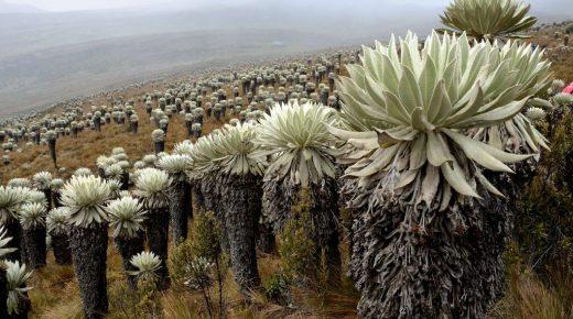 Colombia verzoekt UNESCO om páramos toe te voegen aan werelderfgoedlijst