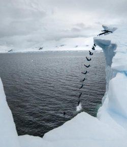 Klifduiker Orlando Duque duikt van 20 meter hoge ijsberg op Antarctica