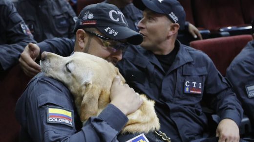Colombiaanse politie eert 14 gepensioneerde speurhonden